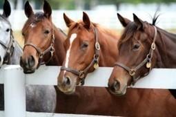 Equestrian Pest Control Florida- West Palm Beach, Boca Raton | Tropical Pest Managemen | chestperez1 | Scoop.it