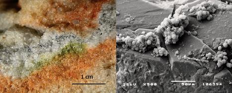 Des champignons de l'Antarctique ont survécu à des conditions similaires à Mars   HiddenTavern   Scoop.it