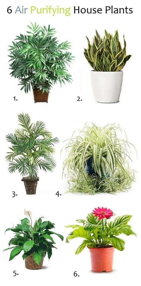 Air Purifying Plants | Backyard Gardening | Scoop.it