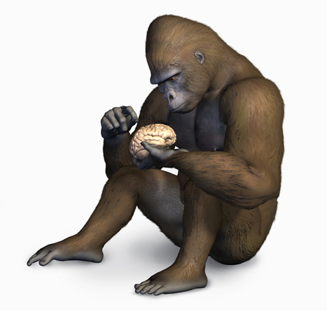 Gorillas Agree: Human Frontal Cortex is Nothing Special   Artificial Intelligence   Scoop.it