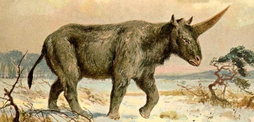 Une véritable licorne préhistorique découverte au Kazakhstan