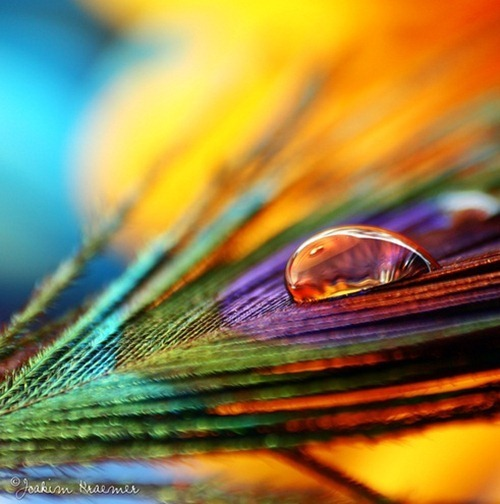 40 Amazing Macro Photography Of Objects
