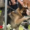 La photo d'un chien devant le cercueil de son maître fait le tour du ... - La une Direct.cd | CaniCatNews-actualité | Scoop.it