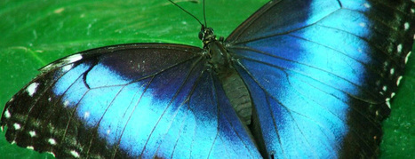 Butterflies Inspire Anti-Counterfeit Technology - PhysicsCentral.com (blog) | CPG | Scoop.it