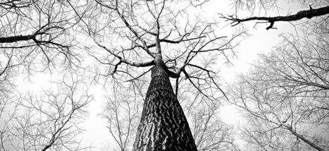 Ne pas laisser l'arbre du digital cacher la forêt des disruptions I Dominique Turcq | Entretiens Professionnels | Scoop.it
