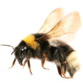 Do Bees Have Feelings?: Scientific American | Cognitive Science | Scoop.it