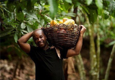 Côte d'Ivoire: le revenu des paysans en hausse de 68% en quatre ans | Questions de développement ... | Scoop.it