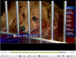 Become part of the solution to end animal cruelty | Compassion in Action | Scoop.it