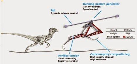 Raptor, le robot coréen bipède qui atteint 46 km/h | TRIZ et Innovation | Scoop.it