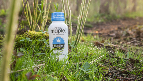 From Tree To Tap: Maple Water Makes A Splash | Erba Volant - Applied Plant Science | Scoop.it