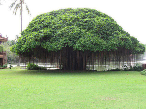 Picture of the Day: Banyan Tree | xposing world of Photography & Design | Scoop.it