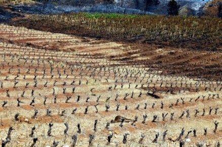 Tout un écosystème detruit - incendie - Hautes-Corbières | Le Vin et + encore | Scoop.it