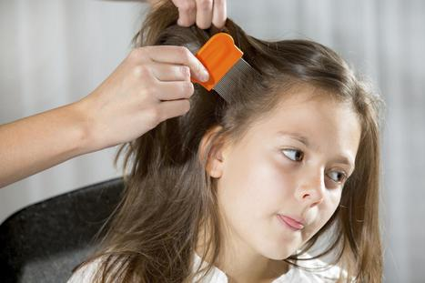 No More Nitz: Eliminate Head Lice Safely With Anti-Lice Shampoos | head lice treatment | Scoop.it
