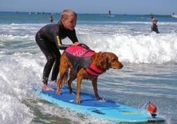 Dog uses surfing skills as form of therapy for people | The Animal-Human Bond | Scoop.it