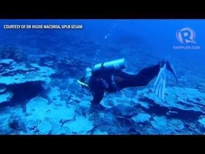Filipinos dive into Benham Rise for the first time | Interesting Philippine History, News and Trivias | Scoop.it