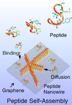 New protein bridges chemical divide for 'seamless' bioelectronics devices   Fragments of Science   Scoop.it