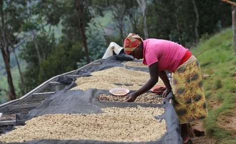 Central Africa: Rwanda, DR Congo Farmers Agree Deal to Ease Trade | Market information | Scoop.it