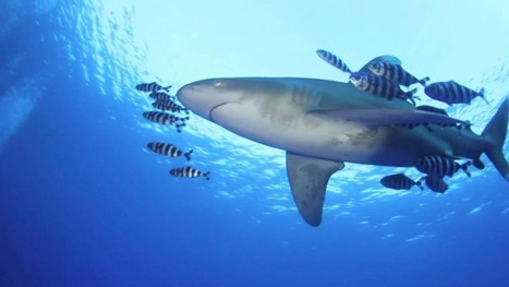 Red Sea Liveaboard Safari - Dive Site Brothers Islands | Indigo Scuba | Indigo Scuba | Scoop.it
