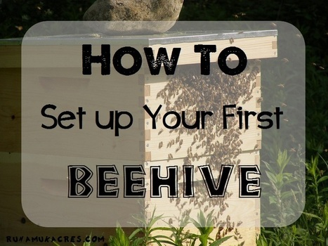 How to set up your first beehive   Runamuk Acres   Technology Education and Sustainable Systems   Scoop.it