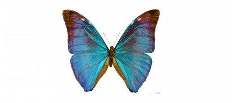 [podcast]Au fait, pourquoi conserve-t-on les espèces ? | EntomoScience | Scoop.it