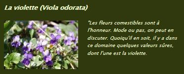 Un jardin, beau toute l'année | Potager & Jardin | Scoop.it