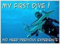 SCUBA SCOOP/latest dive stories: 4 Beginner Tips for Good Scuba Diving Etiquette | All about water, the oceans, environmental issues | Scoop.it