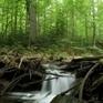 Bavorský les lykožrút nezožral | Milujem prírodu | Scoop.it