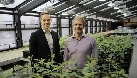Startup Indigo wants to use bacteria to create hardy super-crops | CALS in the News | Scoop.it
