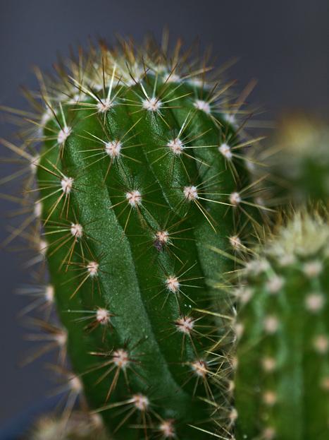 Man killed by Cactus   Strange Deaths   Scoop.it