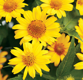 Proven Winners | The Added Beauty of Native Plants | Annie Haven | Haven Brand | Scoop.it