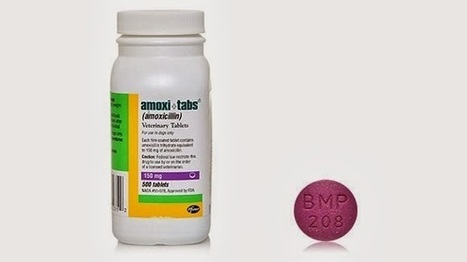 AllVetMed.com: Amoxi-Tabs Contain Semi-Synthetic Antibiotic That is Helpful for Treating Many Ailments | Pet health and medication | Scoop.it