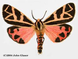 El alfabeto de las mariposas | Las Mariposas | Scoop.it
