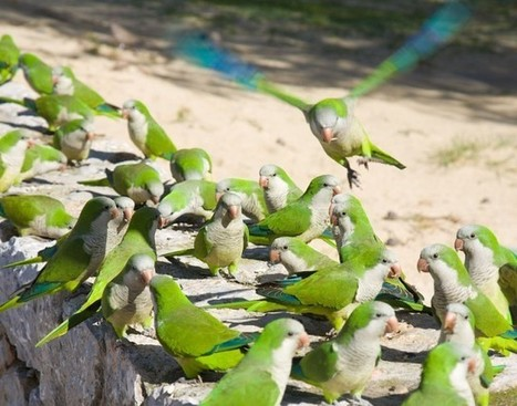 Pecking order for birdbrains » Scienceline | Darwinian Ascension | Scoop.it
