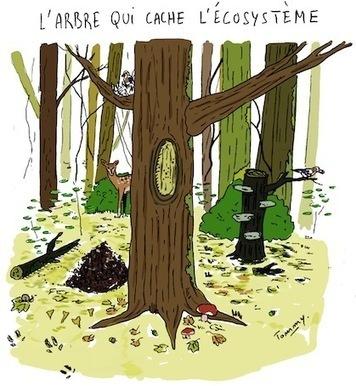 Aspiré par des centrales géantes, le bois n'est plus écologique | RSE et développement durable | Scoop.it