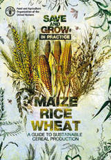 UN FAO publishes new guide: Save and Grow in practice: maize, rice, wheat | WHEAT | Scoop.it
