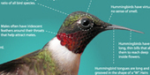 Photo Infographic - All About Hummingbirds | Nature | PBS | 8 Kinds of IG | Scoop.it