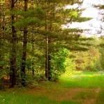 Représentant 40% du territoire, la forêt progresse encore en Europe | Enviro2B | Biodiversité & Relations Homme - Nature - Environnement : Un Scoop.it du Muséum de Toulouse | Scoop.it