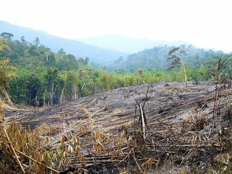 Protected Forests Failing to Protect | Wildlife Trafficking: Who Does it? Allows it? | Scoop.it