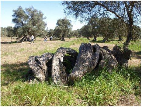 Perché paesaggio, natura, ambiente non sono gestiti 'unitariamente' ? - Gaianews.it | SGAP - Sistema di gestione ambiental-paesaggistico | Agua | Scoop.it