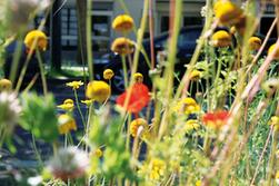 La biodiversité urbaine sujet de recherche | Espace des sciences | Environnement et développement durable | alternatives agricoles | Scoop.it