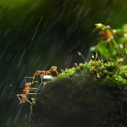 Smithsonian Photo of the Day: Two Ants Help One Another | All About Ants | Scoop.it