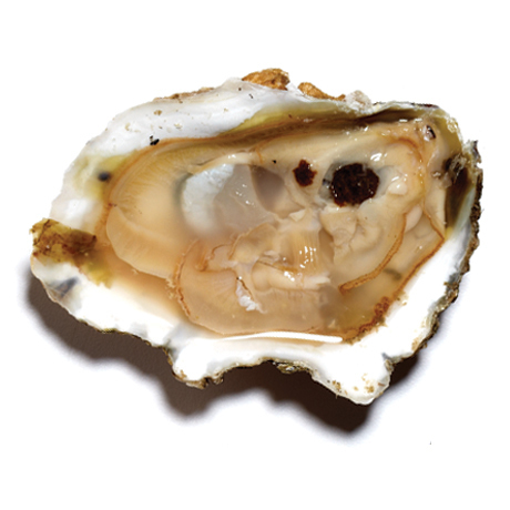 Oysters 50 Count at Made Collection | Food Matters | Scoop.it