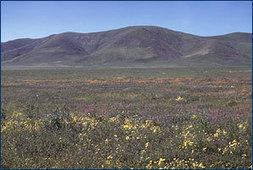 The grassland biome | Tropical Grasslands-Savanna | Scoop.it