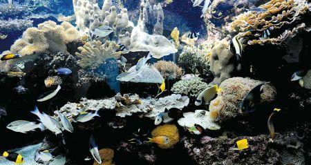 Plongeon dans les coulisses de l'Aquarium - Les Nouvelles Calédoniennes | Biodiversité NC | Scoop.it