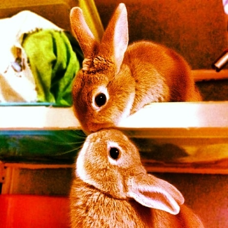 Beso entre conejitos http://t.co/6dh4VNtyhZ | @hectorarturo | Scoop.it