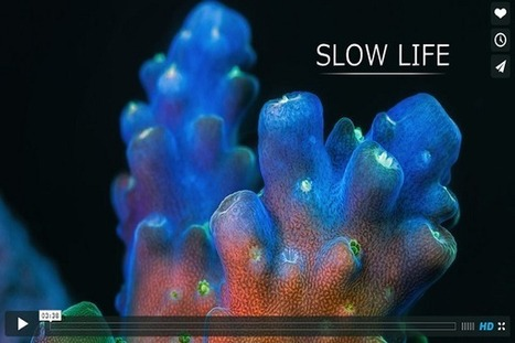 The secret life of corals (Science Alert) | IELTS, ESP and CALL | Scoop.it