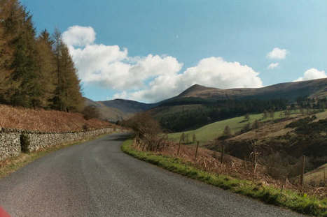 Road Ecology: An Often Overlooked Field Of Conservation Research | green streets | Scoop.it