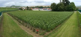 Champagne: Seeing the value in wine | Vitabella Wine Daily Gossip | Scoop.it