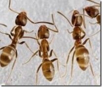 Ants! Ants! Ants! Webinar Set for March 1 - News Line | Good Gardening News and Advice | Scoop.it