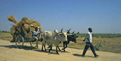 L'UE ouvre librement ses marchés aux produits du Cameroun | Questions de développement ... | Scoop.it